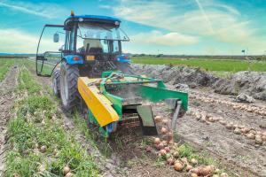 양파 수확 현장방문(2020. 6. 15)